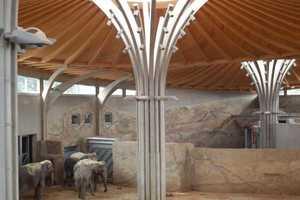Konstrukcja dachu wybiegu<br>dla słoni w kolońskim ZOO<br>pomalowana Koralan® Holzöl<br>fot. Kurt Obermeier
