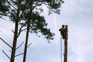 Sekcyjna ścinka drzew