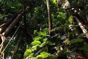 Co roku Kongo eksportuje produkty drzewne warte około 240 milionów euro