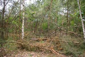 Szkody wywołane przez huragan w Nadleśnictwie Piaski