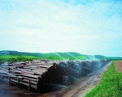 Zraszanie suroca drzewnego na placu magazynowym jest gwarancją zachowania wysokiej jakości produktu