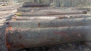 III submisja drewna specjalnego przeznaczenia - Włoszczowa 2013