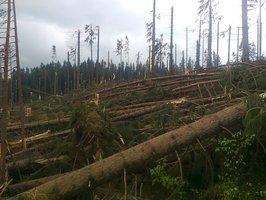Ogromne straty w słowackich lasach po huraganie Yvette