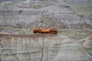 Kłoda skamieniałego drewna w Petrified Forest National Park - Park Narodowy Skamieniałego Lasu (Arizona/USA)
