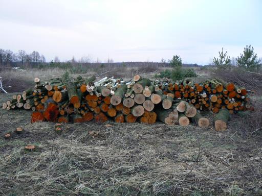 Drewno kominkowe olcha brzoza 300 mp