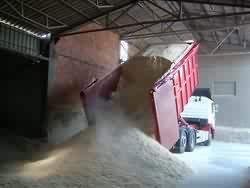 Producent Biomasy kupi trocinę, pył drzewny, itp.
