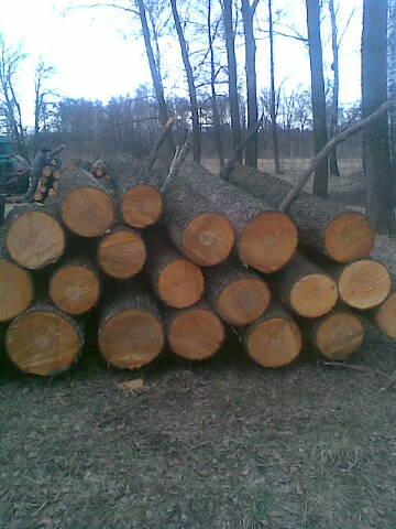 Дерево з України: дош&#108