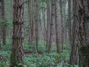 najtańsze drewno ze Słowacji