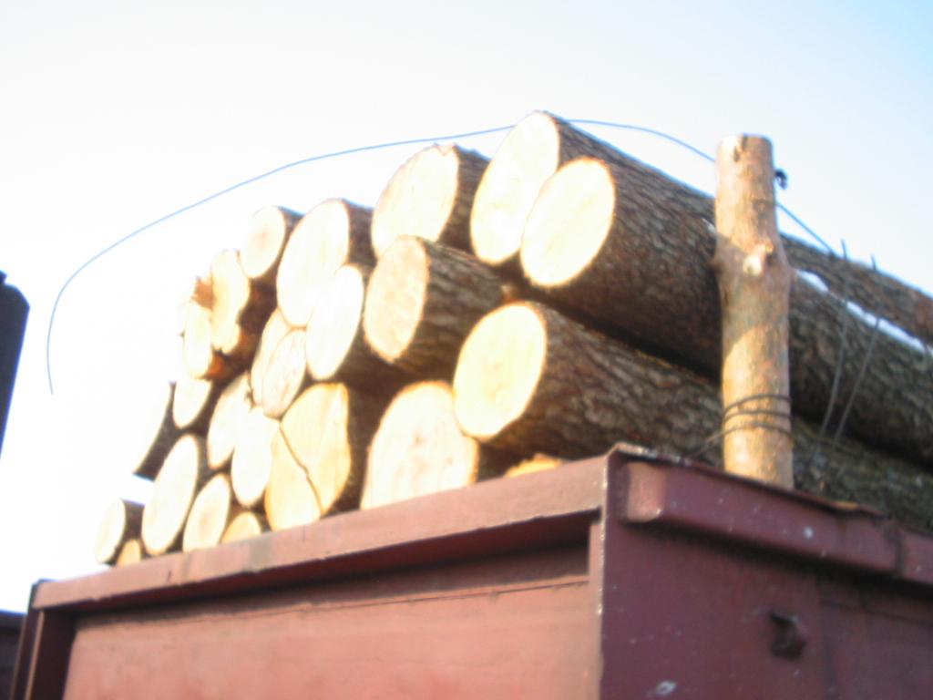 Drewno tartaczne - brzoza, olcha
