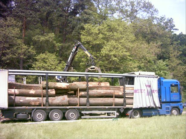 Międzynarodwy Transport Drewna