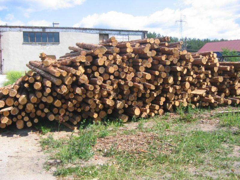 Drewno sosnowe