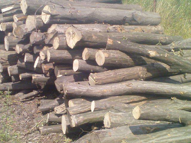 Nawiąże współprace z odbiorca drewna kominkowego i produkcyjnego