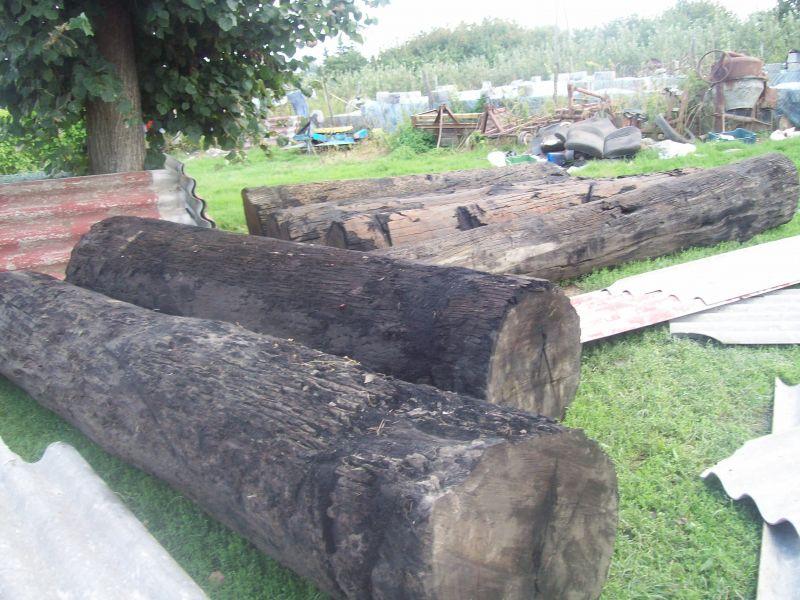 Zaawansowane DĄB CZARNY- Ogłoszenia branży drzewnej - Giełda DREWNO.PL MN52