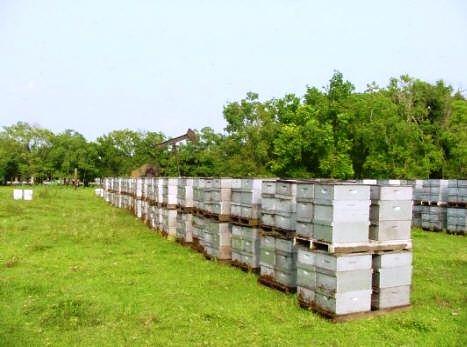 Ukraina.Miod 6 zl/kg.Gospodarstwa pszczelarskie,pasieczne.Tanio